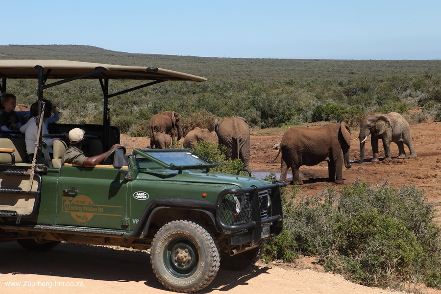 Zuurberg-Inn Game Drive